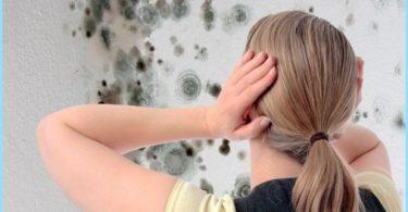 Comment se débarrasser de la moisissure dans la salle de bain: un moyen de lutte contre la